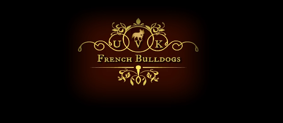 French Bulldog Health Guarantee / Sales Contract ~ Akc French