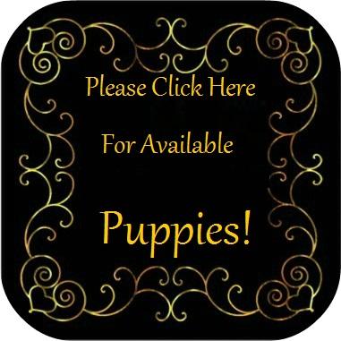 Oregon French Bulldog Puppies for Sale, Oregon French